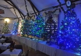 Trees sparkle in the Wilberforce Hall