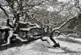 The Dragon Tree, Brighstone