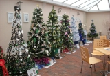 Trees at Isle of Wight Pearl for the Brighstone Christmas Tree Festival