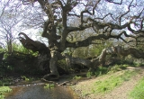 Brighstone Dragon Tree by David Motkin