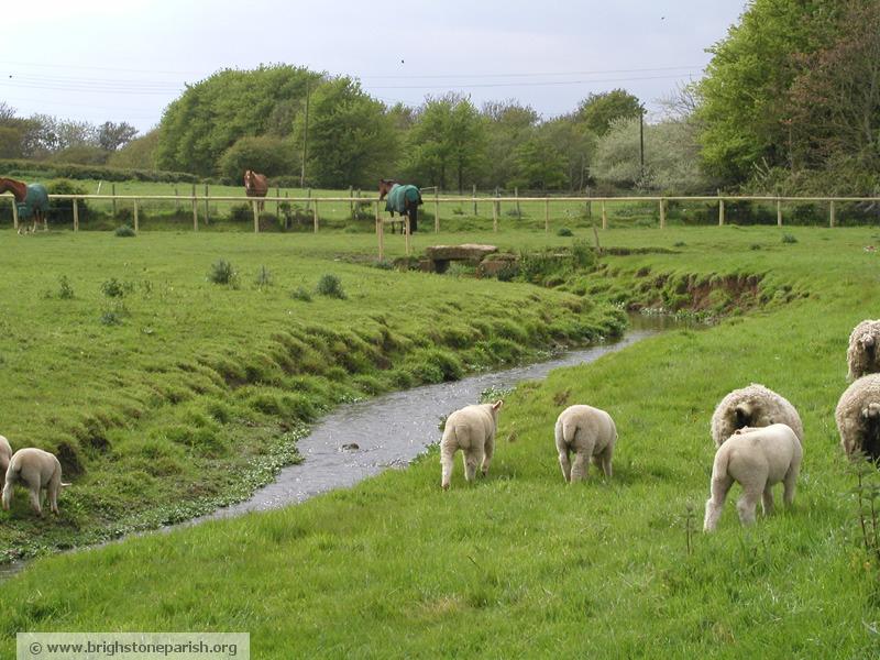 Photo of Waytes Court, Sheep, Brighstone